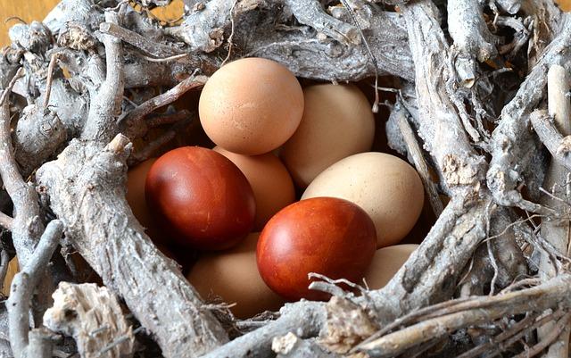 egg-495256_640