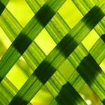 leaves-108969_640